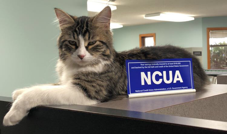 NCUA cat
